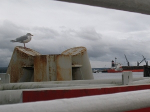 seagull on dock (600x450)
